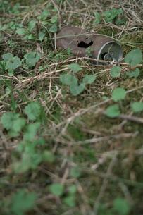 捨てられた空き缶の写真素材 [FYI00499169]