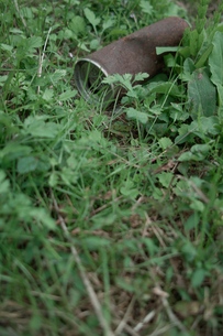 捨てられた空き缶の写真素材 [FYI00499173]