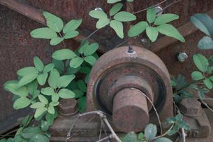 捨てられた鉄のかたまりと雑草の生命力の写真素材 [FYI00499182]