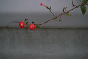 野花の写真素材 [FYI00499197]