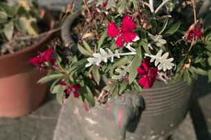 花の写真素材 [FYI00499215]