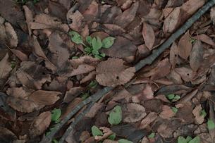 落葉、小枝の写真素材 [FYI00499283]