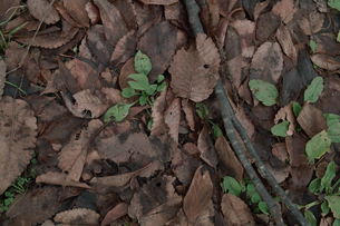 落葉、小枝の写真素材 [FYI00499285]
