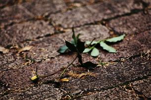 地面に落ちた蕾の写真素材 [FYI00499391]