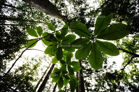 Leavesの写真素材 [FYI00499401]