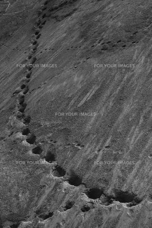 砂山の足跡の写真素材 [FYI00499403]