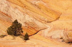 landscapesの素材 [FYI00514464]