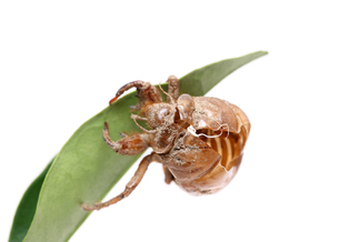 insects_spidersの写真素材 [FYI00527297]