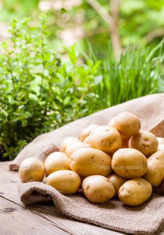 fruits_vegetablesの素材 [FYI00529047]