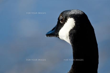 birdsの写真素材 [FYI00533214]