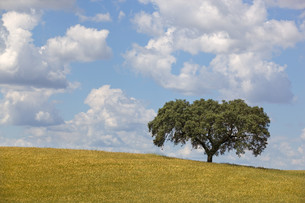 landscapesの写真素材 [FYI00533468]