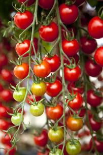 fruits_vegetablesの写真素材 [FYI00535793]