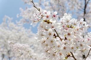 plants_flowersの写真素材 [FYI00539212]