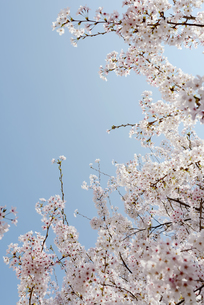 plants_flowersの写真素材 [FYI00539214]