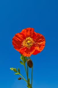 plants_flowersの写真素材 [FYI00539219]