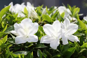 plants_flowersの写真素材 [FYI00539500]