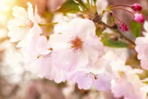 plants_flowersの写真素材 [FYI00539739]