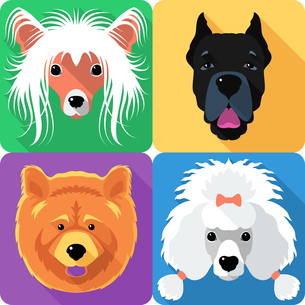 home_animalsの素材 [FYI00539773]