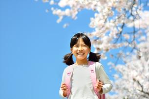 桜と小学生の女の子の写真素材 [FYI00541510]