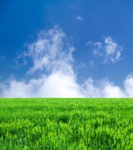 麦畑と青空の写真素材 [FYI00542166]