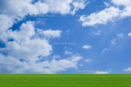 草原と青空の写真素材 [FYI00542171]