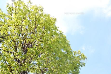 環境の写真素材 [FYI00542704]