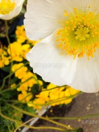 花の写真素材 [FYI00542752]