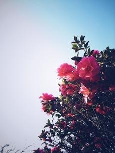 花の写真素材 [FYI00542755]
