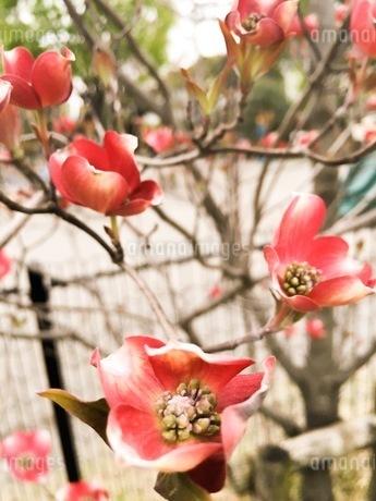 花の写真素材 [FYI00542762]