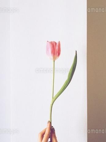 花の写真素材 [FYI00542763]
