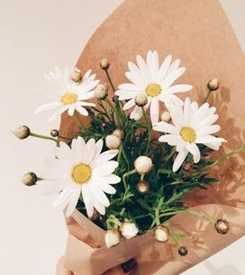 花の写真素材 [FYI00542765]