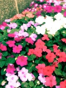 花の写真素材 [FYI00542768]