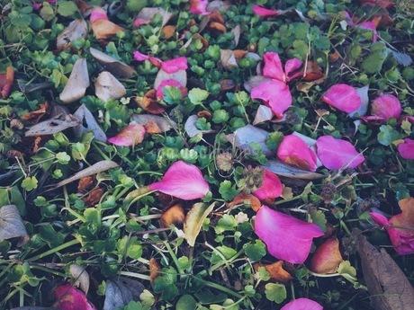 草花の写真素材 [FYI00542770]