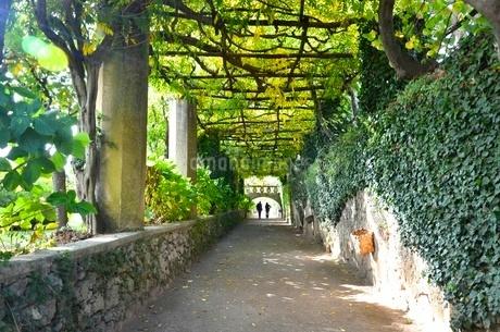 イタリアのラヴェッロの街中風景の写真素材 [FYI00543069]