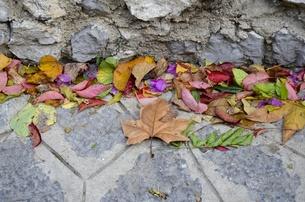 イタリアのラヴェッロの街中風景の写真素材 [FYI00543070]