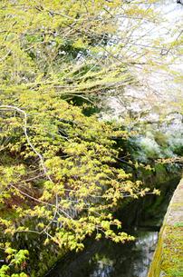京都 新緑の哲学の道の写真素材 [FYI00543704]