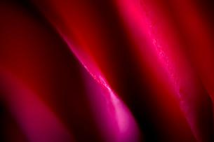 赤い薔薇の写真素材 [FYI00543735]