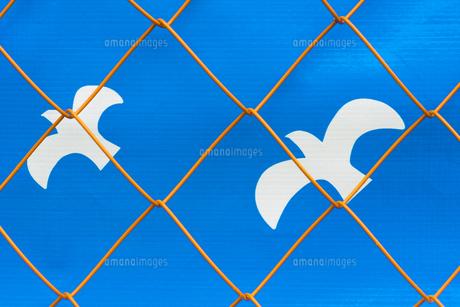 フェンスと鳥の写真素材 [FYI00543746]