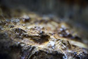 木くずの超接写の写真素材 [FYI00543752]