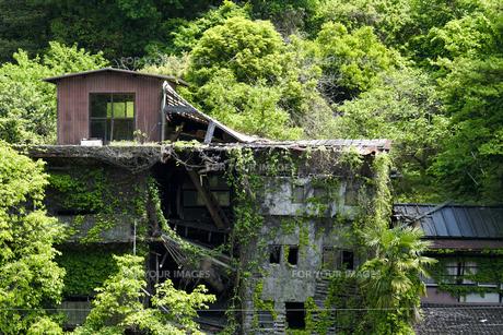 廃墟と緑の写真素材 [FYI00543762]
