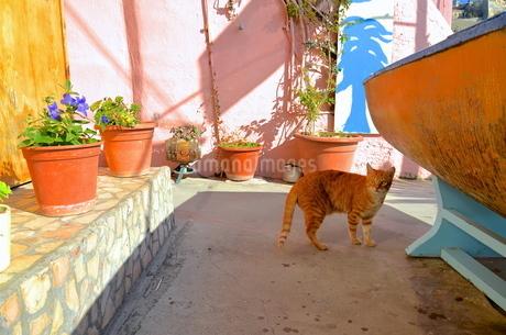 イタリアのプロチーダ島に暮らす猫の写真素材 [FYI00543846]