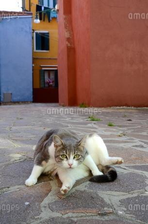 イタリアのブラーノ島で暮らす猫の写真素材 [FYI00543848]