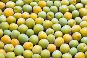 たくさんの完熟梅の写真素材 [FYI00543888]