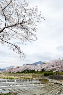 京都 高野川沿いの桜と比叡山の写真素材 [FYI00544533]
