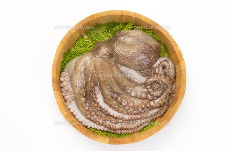 なま蛸の写真素材 [FYI00544742]