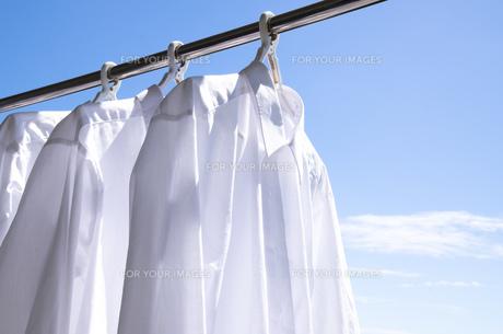 洗濯日和 青空の下でのワイシャツ干しの写真素材 [FYI00544826]