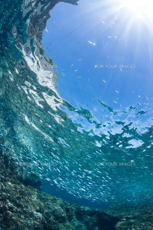 透明度の高い海と太陽の写真素材 [FYI00544948]