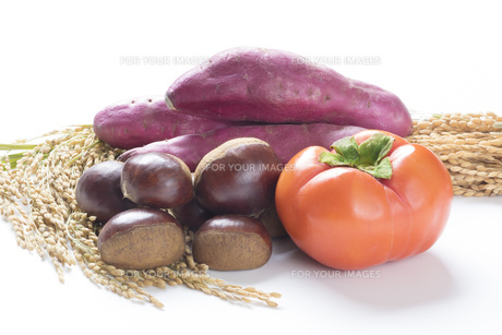 実りの秋食材の写真素材 [FYI00544973]