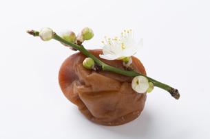 梅干しと梅の花の写真素材 [FYI00545203]