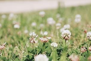 花の写真素材 [FYI00545267]